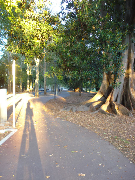 Botanic Gardens, adelaide parklands, bike trail, cycle