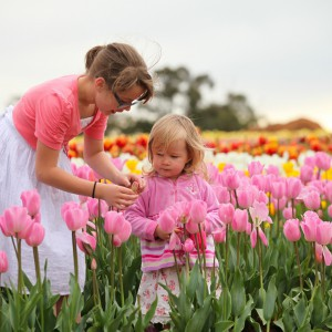 Children's Week, Tesselaar Tulip Farm, Festival, Activities