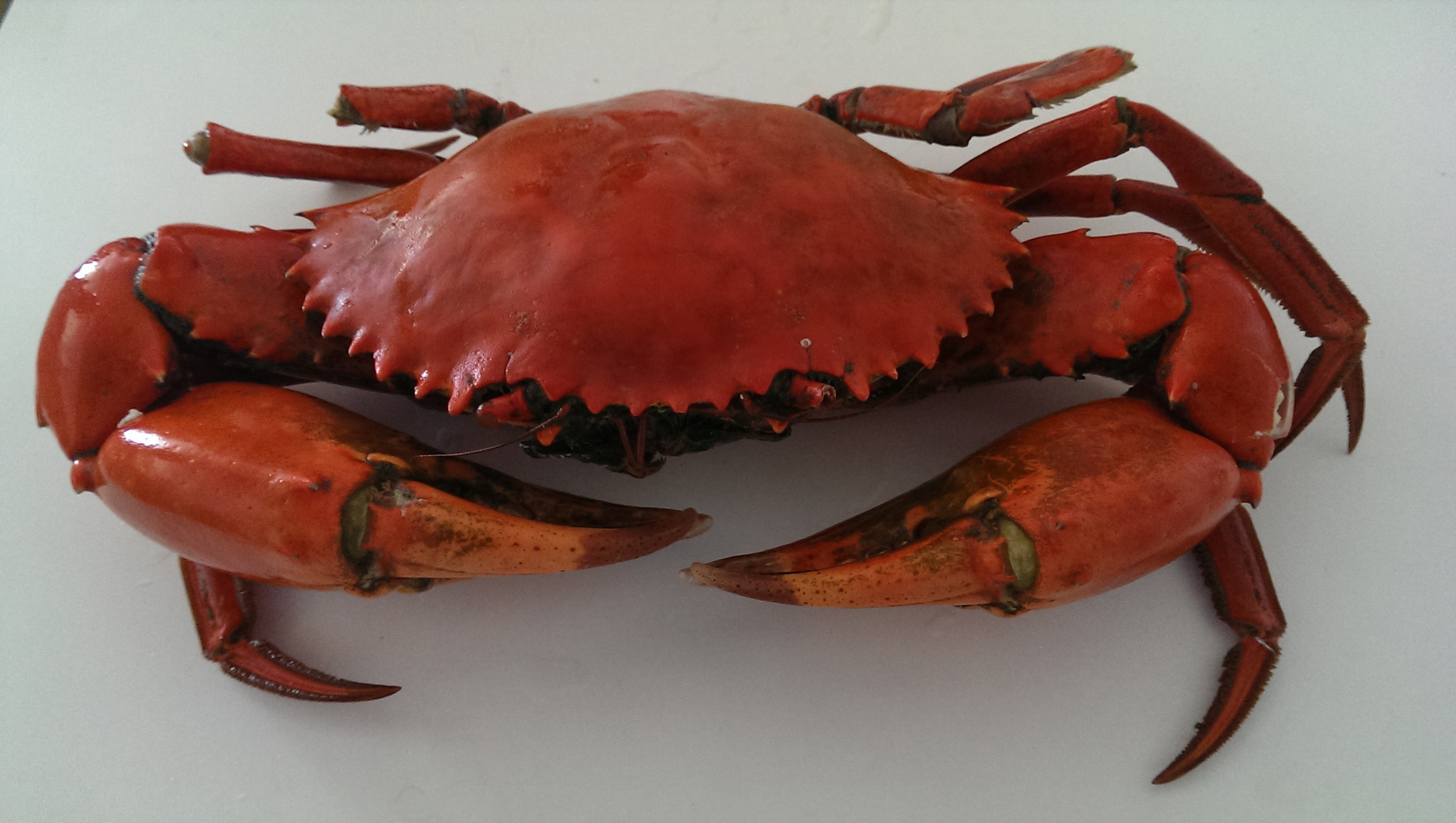 how to cook crab meat without the shell