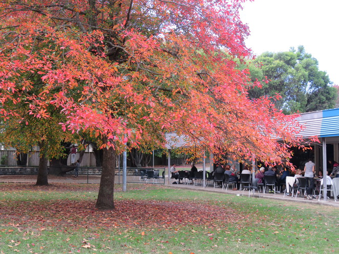 Deli in the park, Cafe, child friendly, Lindfield, family friendly, park, children,
