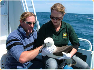 Image is from the WA Seabird Rescue website.