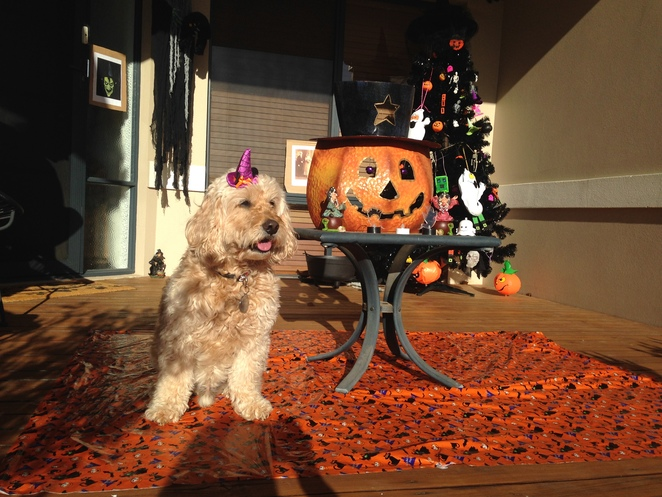 halloween party, things to do with your dog in october, free events in perth, rac arena, dog halloween party, halloween activities for dogs, halloween with your dog, howl-o-ween pawty