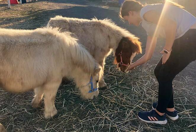 Many rescued animals find a home at Horses in Mind
