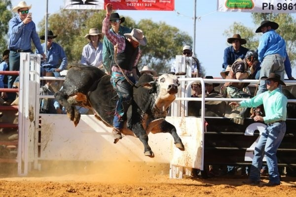 in,the,ring,at,a,rodeo