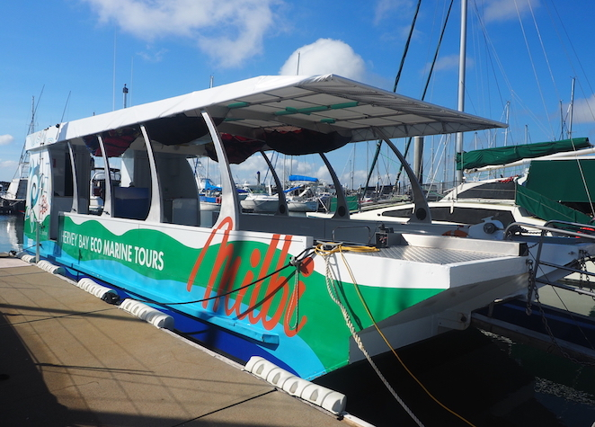 Milbi, hervey bay, boat, cruise, marine, ecotours, sea, turtles, dolphins, tours, sightseeing, sailing