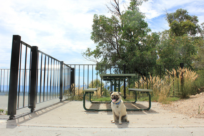 pearsons lookout, lithgow, capertee valley, pantoney's crown, gardens of stone, wollemi national park, dog friendly, disabled access, sydney, new south wales, bird watching, blue mountains, free, view, nature