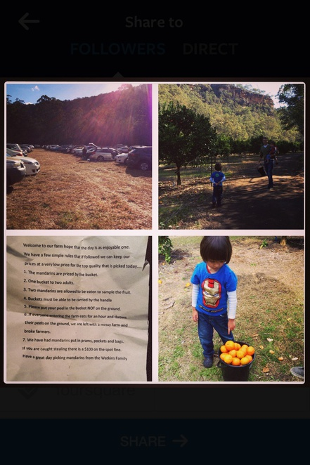 Watkins family farm, pick your own, weekend excursion, mandarins and mushroom picking