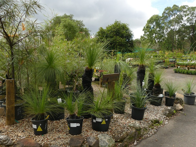 wirreanda nursery ingleside nsw