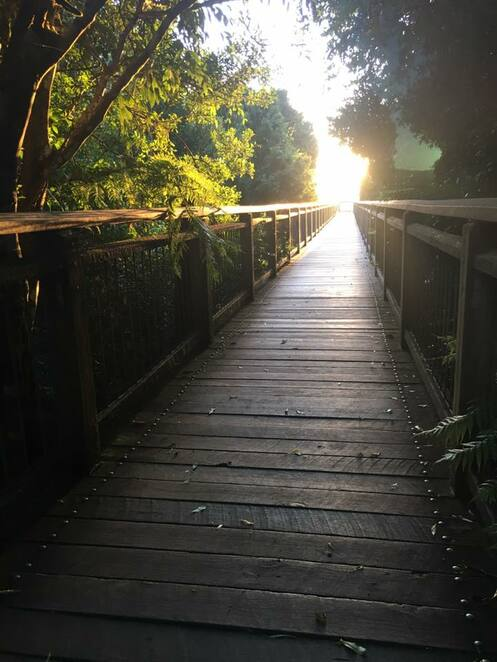 Sunrise on the Dorrigo Skywalk