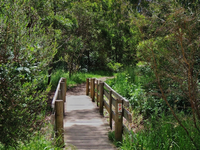 adelaide, park, conservation park, trail, dogs, adelaide hills, creek, free, mount george, bridge