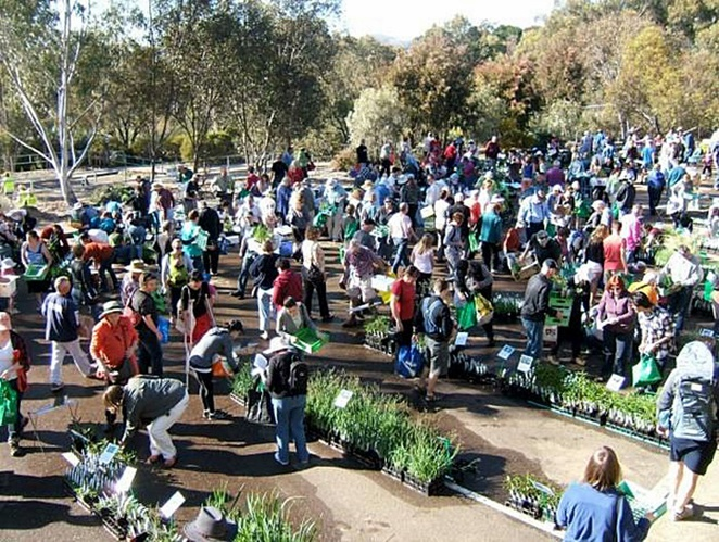 australian native plant society, australian national botanical gardens, plant sales, cheap plants, canberra, ACT,