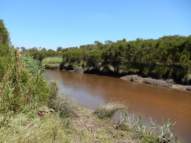 bunyip river, south gippsland highway, lookout tower, swamp reserve, koo wee rup,