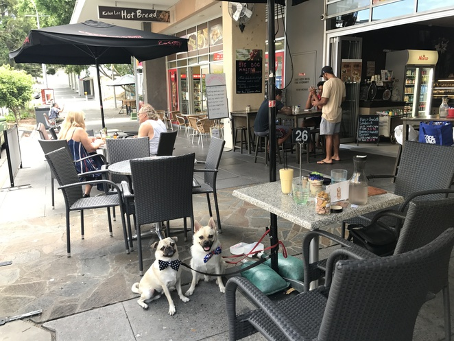 coco cozy cafe, dog friendly, cafe, restaurant, kelvin grove, kelvin grove village, northside, northern suburbs, brisbane, qut, coffee, breakfast, brunch, dinner, lunch, asian, food, fusion