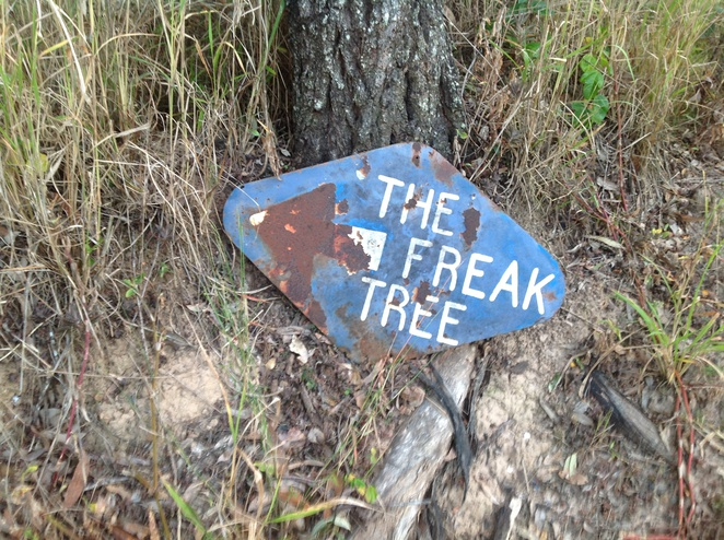 Freak Tree