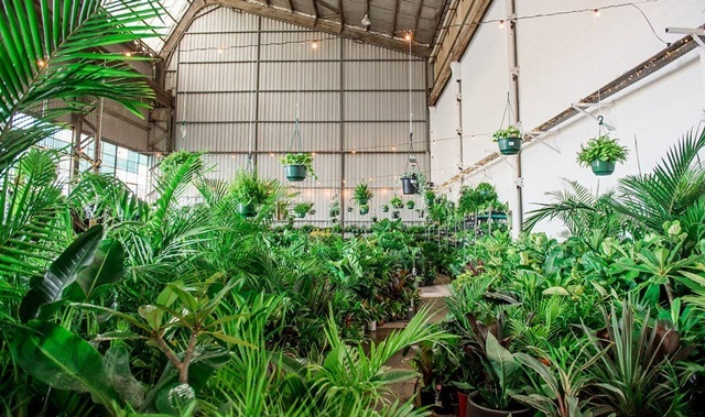 Indoor,plant,warehouse,sale