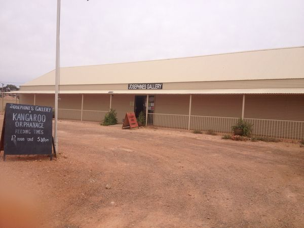 Kangaroo,orphanage,josephines, coober, pedy, donate, volunteer