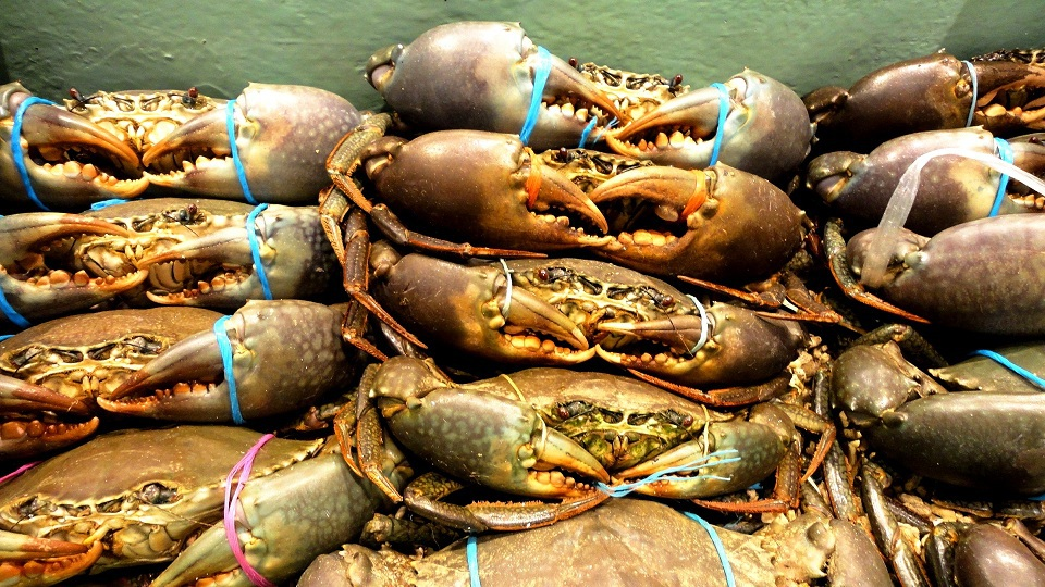 What Makes The Giant Mud Crab So Popular Everywhere