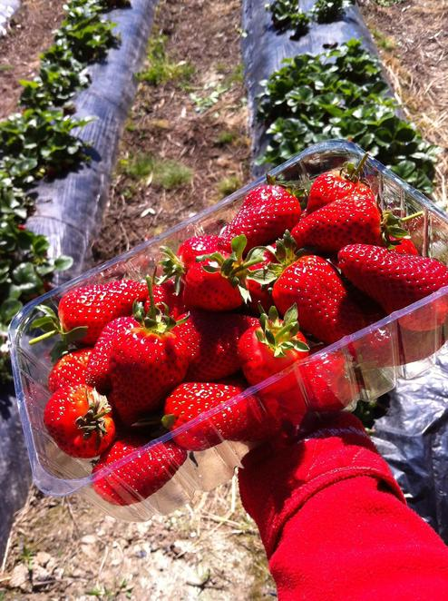 Where to Pick-Your-Own Fruit - Adelaide - WeekendNotes