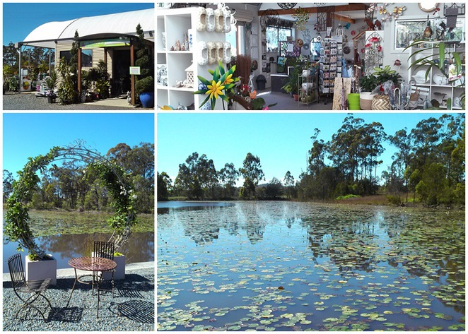 abundance lifestye and garden, port macquarie, NSW, cafes with views, families, seniors, cafes, plant nurserries, sancrox, rawdon island,