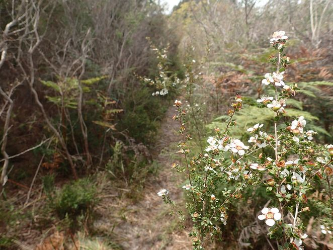 Bay Road Heathland Sanctuary, Sandringham, heathland, walks, parks, bird watching, wildflowers, walking trails, nature