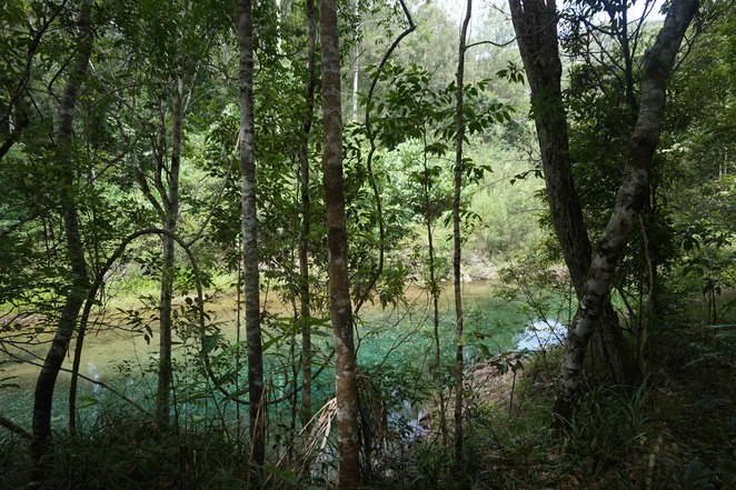 Beautiful green Booloumba Creek