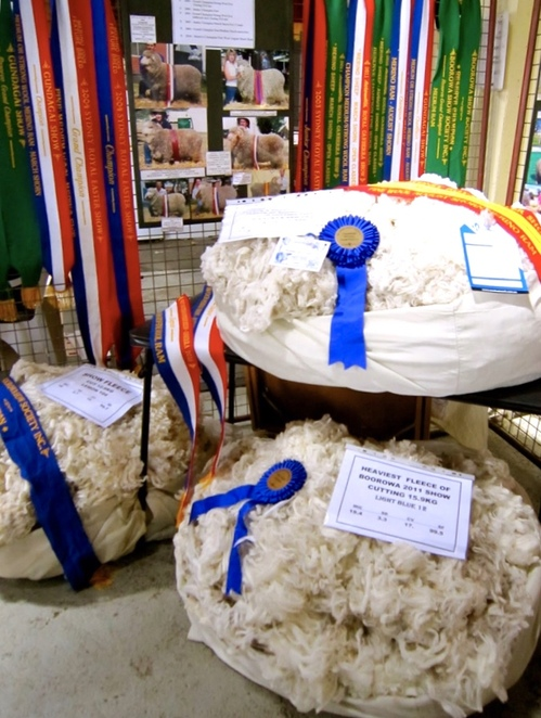 Boorowa, Irish Woolfest, Running of the Sheep, Canberra, day trip, festival, country town, parade