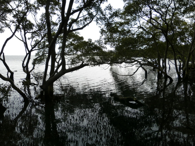 Create-a-Tour, Wynnum Wetlands mangroves, nature walks, breeding grounds for sealife