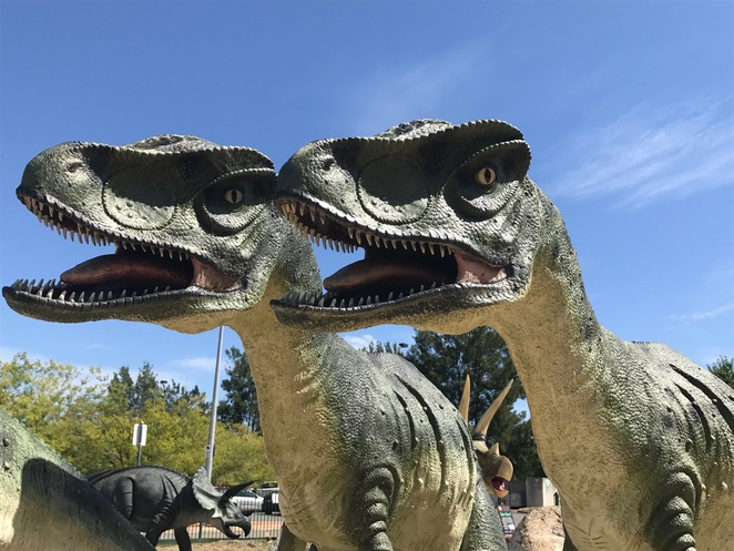 National Dinosaur Museum, Canberra family attractions, gold creek, fun things to do Canberra's, kids activities Canberra, rainy day activities Canberra, Canberra walk in aviary