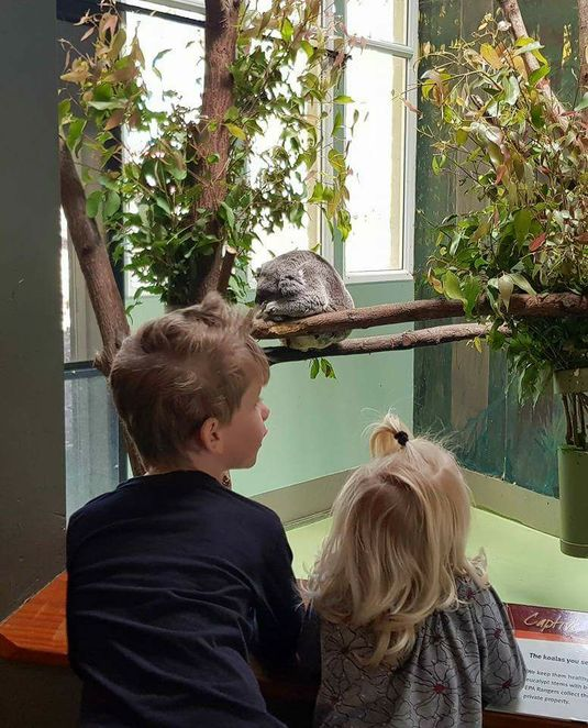 Daisy Hill, koala, educational, free admission,