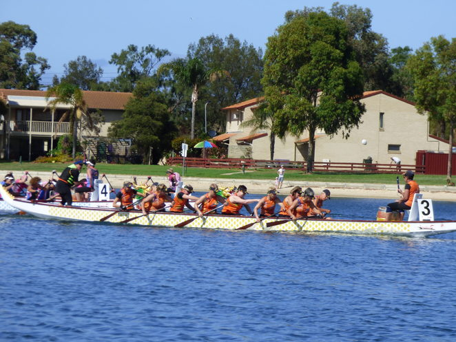 dragon boat, dragon boating, dragon boat racing, adelaide sea dragons, south australian, adelaide, west lakes, come and try, Dragon boat races (Image: Adelaide Sea Dragons)