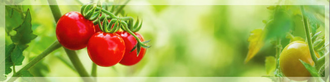 easy edibles bright learning tomatoes