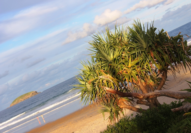 Emerald Beach, Coffs Harbour, Beach, School Holidays, Kangaroos, Surfing, NSW