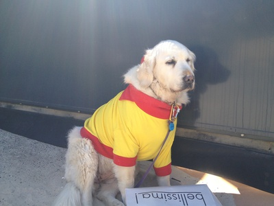 Kyrra, the mascot for the Met Caloundra SLSC, doing a bit of fundraising on Kings Beach