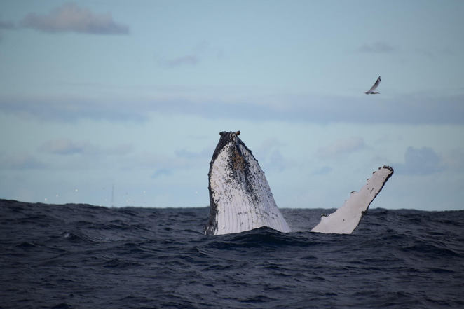 Humpback Whale Sighted