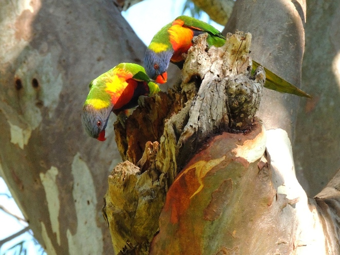walking, mountain bike, park, quarry, trail, trails, walking trail, randell park, rainbow lorikeets