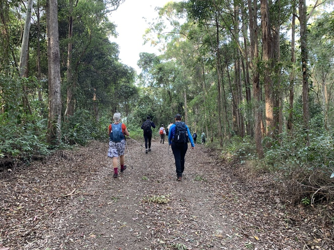 Augies Loop Hike, D'Aguilar National Park, Bullockys Dam, Group Hiking South East Qld and More, South Boundary Road, Augies Road, Creek Road, Gold Creek Boundary Break, Scrub Road, Scrub Road Bush Camp, Storm Shelter, Thylogale Trail,