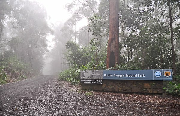 Entrance to the Border Ranges National Park