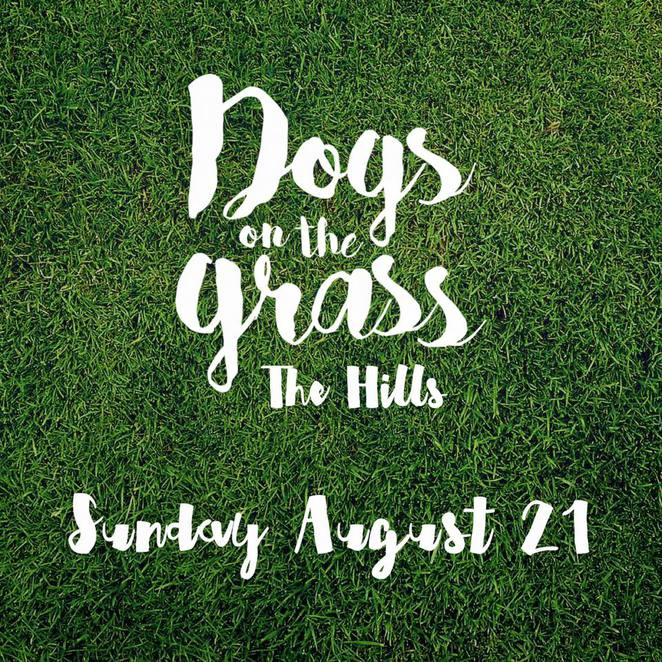 dogs on the grass, dog friendly