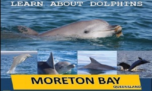 dolphin research, Moreton bay, dolphins, Redlands bay,