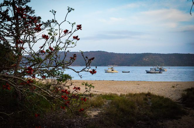 patonga, beach, nsw, beaches near sydney, coast, sea, escape sydney, central coast