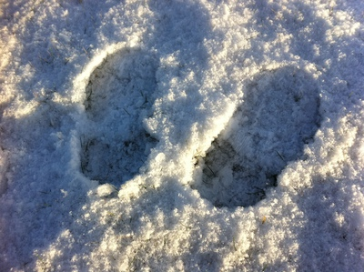 snow, footprints, fun, kids
