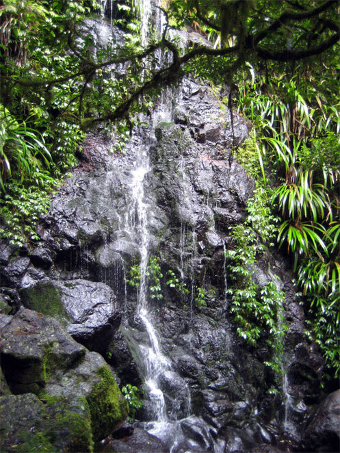 One of many waterfalls on the Toolona Creek Circuit