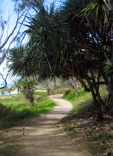 The path at North Stradbroke Island near Cylinder Beach