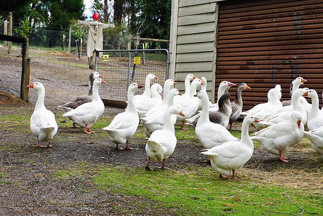 wiggley bottom farm, farm stay, cottage, weekend getaway, escape, yarra valley, country side, wineries