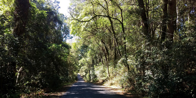 The Bunya Mountains Road cuts through the national park