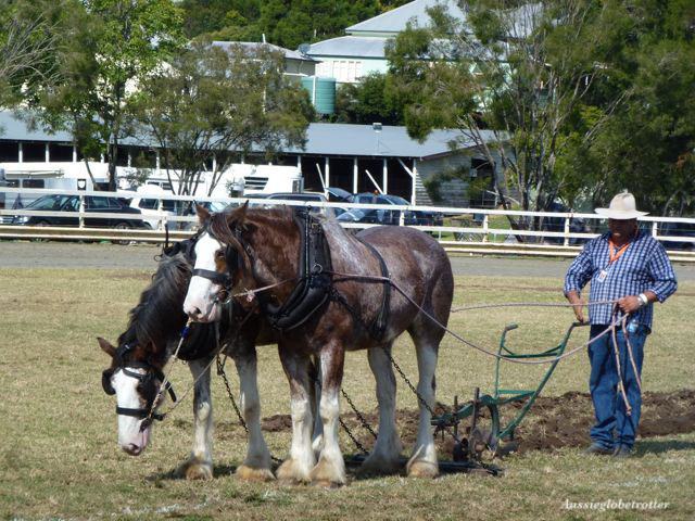 Clydesdale, Clydesdale Spectacular, Scenic Rim, Boonah, June, horse, festival, Scottish