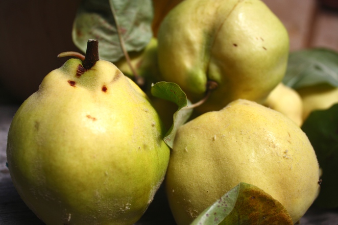 The underrated Quince – Photo Jenny Esots