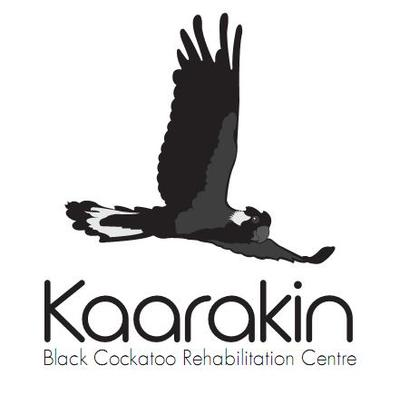 Image is from the Kaarakin Black Cockatoo Rehabilitation Centre website.