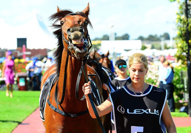 Melbourne Cup, Derby Day, AAMI Victoria Derby Day, melbourne Cup Carnival, horse racing in melbourne, melbourne races,