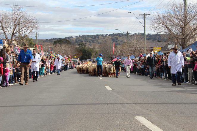 Image courtesy of the Merriwa Festival of the Fleeces Facebook page